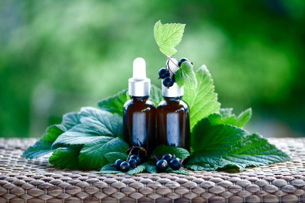 Blackcurrant Seed Extract Oil | Top Beard Wash Ingredients and What They Do